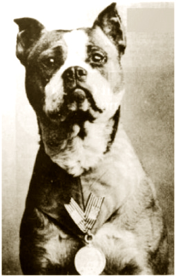 Communication on this topic: How a Pet Became a Therapy Dog, how-a-pet-became-a-therapy-dog/