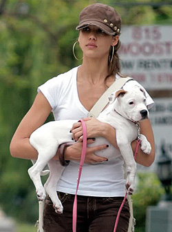 Celebrities Who Own Pit Bulls