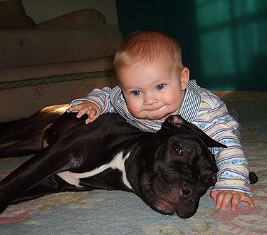 pitbull and kid