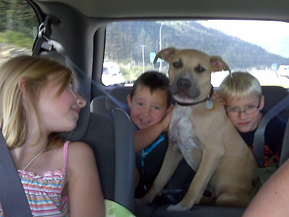 StubbyDog: Stories - Pit bulls and kids