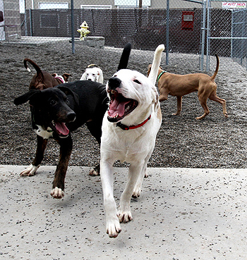 Stubbydog: News & Views - Dog parks may not be the best place to socialize your dog