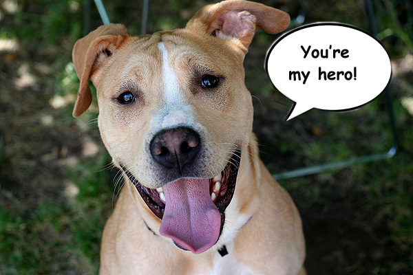 StubbyDog: Stories - Fans share their heroes for pit bulls