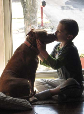 How Did You Introduce Pit Bull To Baby Stubbydog