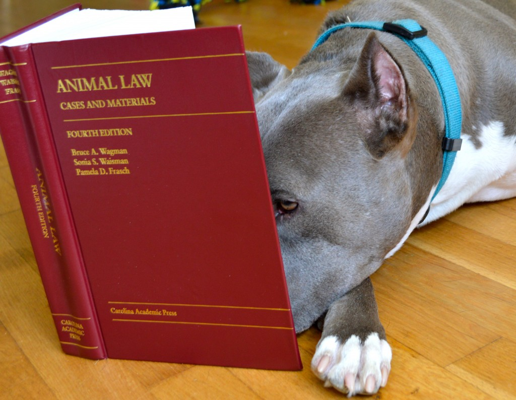 stubbydogs and the legal system   stubbydog