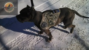 Dogs for Heroes 2