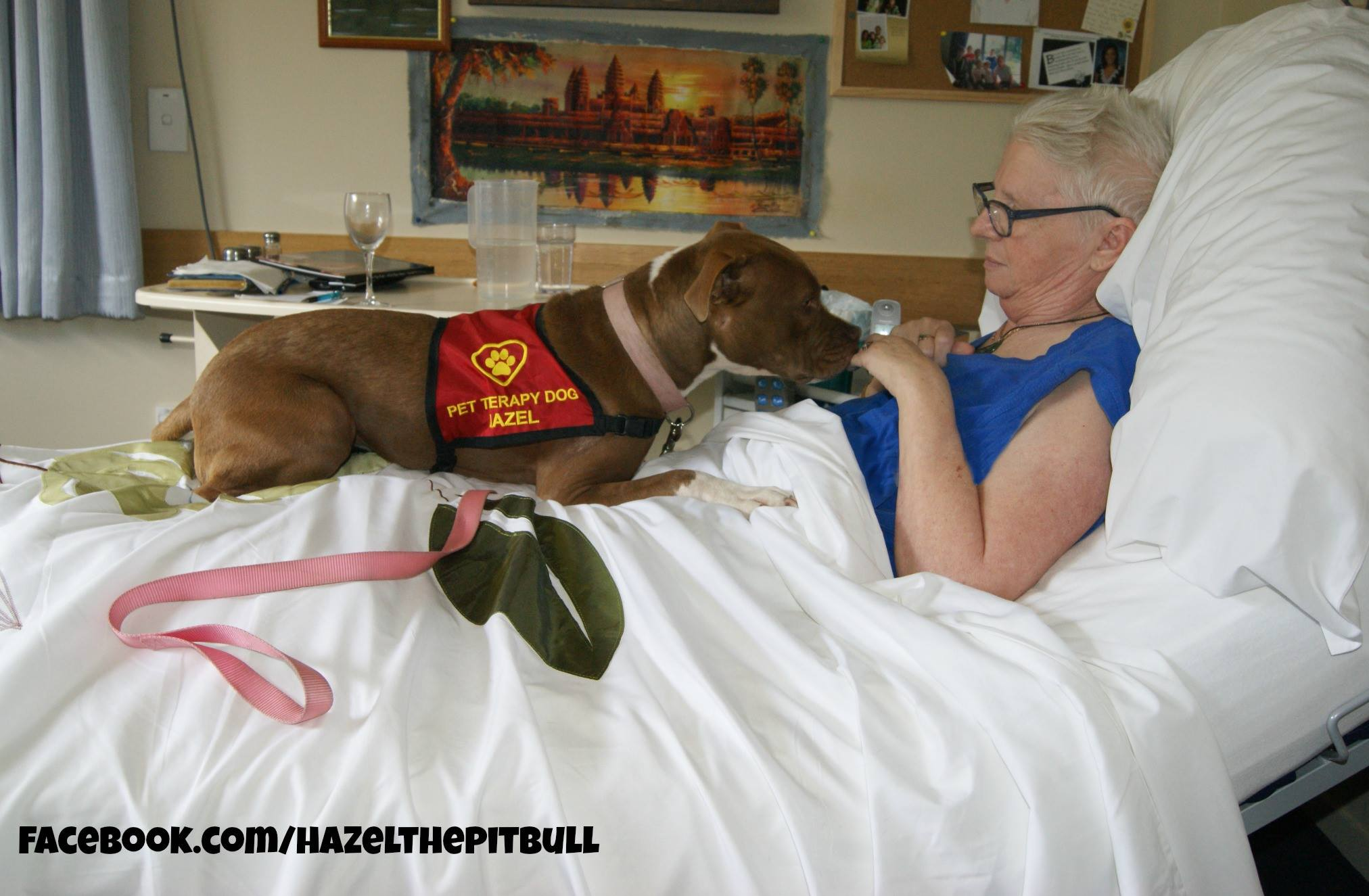 Hazel spayed fabulous stubbydog therapy 1betcityfo Image collections